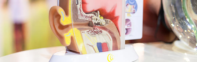 лечение тугоухости народными средствами — мнение врачей